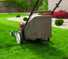 Summer Lawn Maintenance